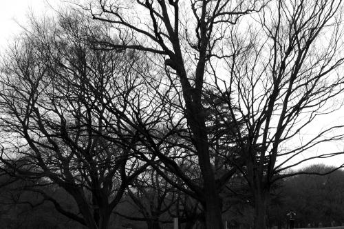 冬の砧公園
